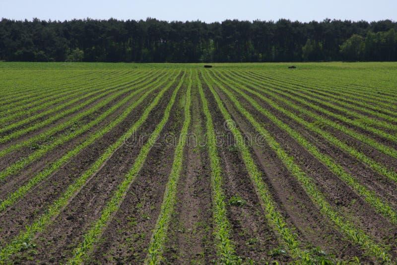 Landwirtschaftliche Getreide lizenzfreie stockfotografie
