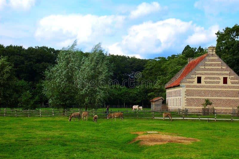 Landwirtschaftliche Landschaft. stockfotografie