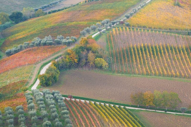 Landwirtschaftliche Landschaft lizenzfreie stockbilder