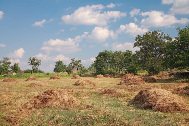Landwirtschaftliche Landschaft lizenzfreies stockbild