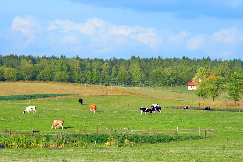 Landwirtschaftliche Landschaft des polnischen Sommers stockbild