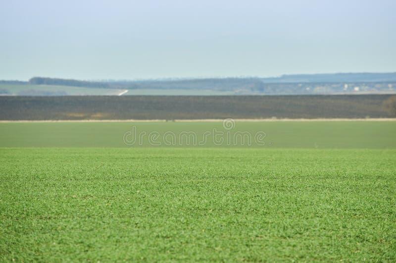Landwirtschaftliche Landschaft Gr?nes Feld des Winterweizens mit Schneewegen Fr?hling in Ukraine lizenzfreie stockfotografie