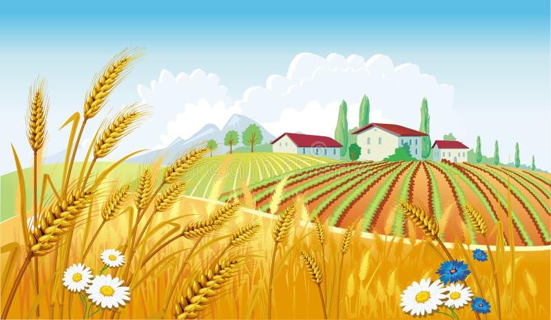 Landwirtschaftliche Landschaft mit Feldern lizenzfreie abbildung