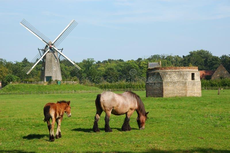 Landwirtschaftliche Landschaft mit Windmühle und Pferden. lizenzfreies stockbild