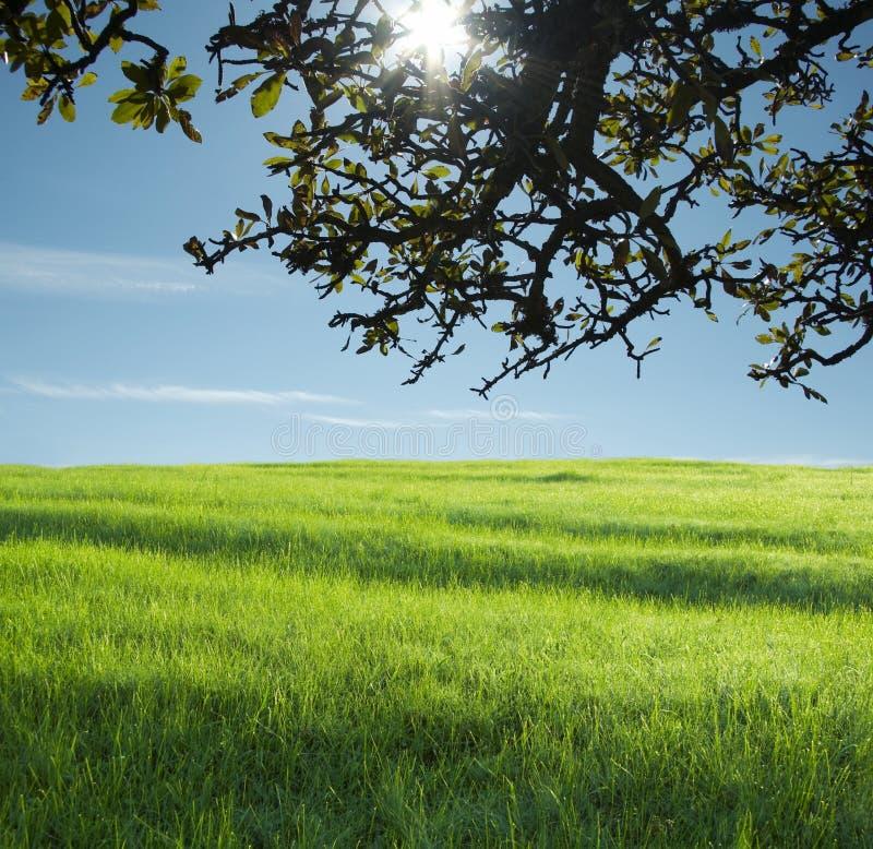 Landwirtschaftliche Landschaften lizenzfreie stockfotos