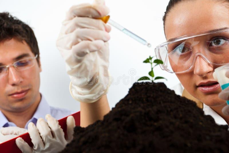 Download Landwirtschaftliche Leute Der Wissenschaftler Stockfoto - Bild von kräuter, agronomie: 15387048