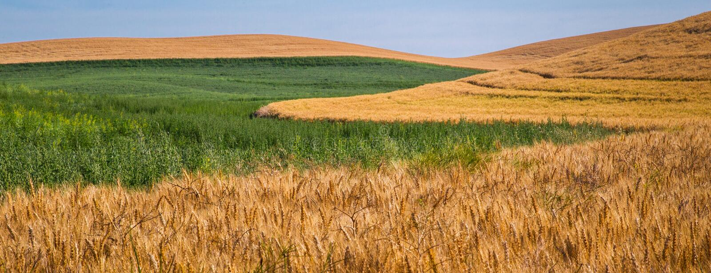 Landwirtschaftliche Muster stockfotos