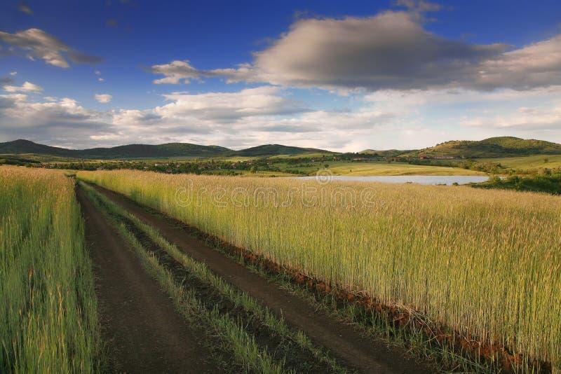 Landwirtschaftliche Straße lizenzfreies stockfoto