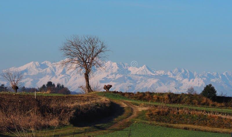 Landwirtschaftliche Straße in einer Winterlandlandschaft mit bloßen Bäumen und geschneiten Bergen auf Hintergrund stockfoto
