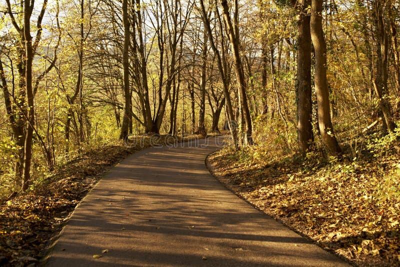 Landwirtschaftliche Straße im Herbst lizenzfreies stockfoto