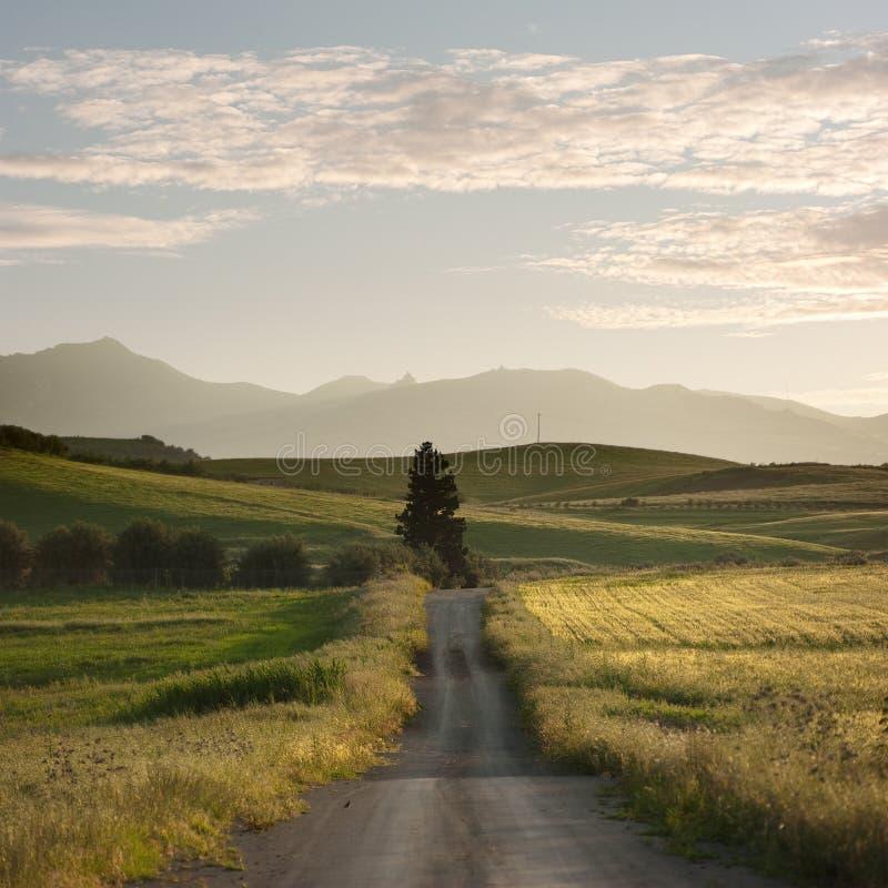 Landwirtschaftliche Straße kreuzt Gelb-Felder lizenzfreies stockbild