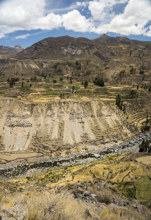 Download Landwirtschaftliche Terrassen Und Colca-Fluss Arequipa, Peru Stockbild - Bild von fluß, peru: 90231051