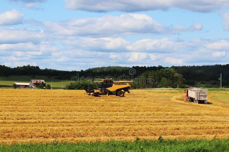 Landwirtschaftlicher Hintergrund und Landleben am Sommerkonzept lizenzfreie stockfotos