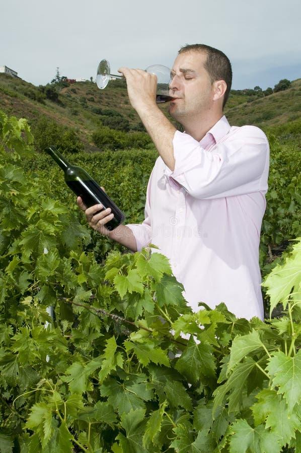Landwirtschaftlicher Mann im Weinbergprobierenwein stockbild