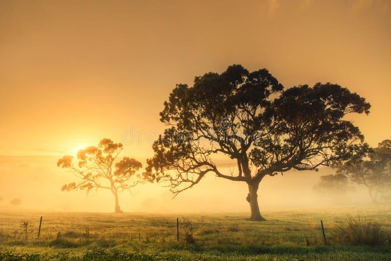 Landwirtschaftlicher Sonnenaufgang lizenzfreie stockfotografie