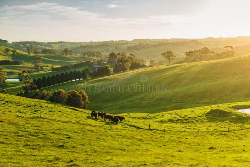 Landwirtschaftliches Australien stockfoto