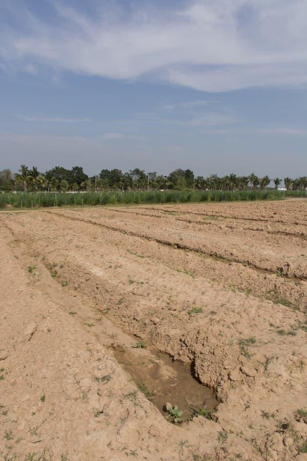 Landwirtschaftliches Feld stockfoto