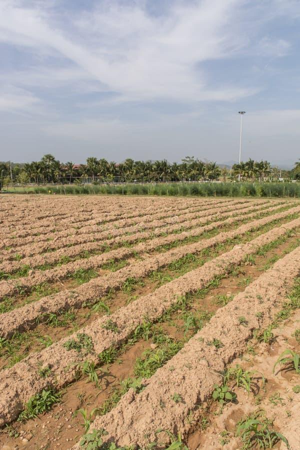 Landwirtschaftliches Feld lizenzfreies stockbild
