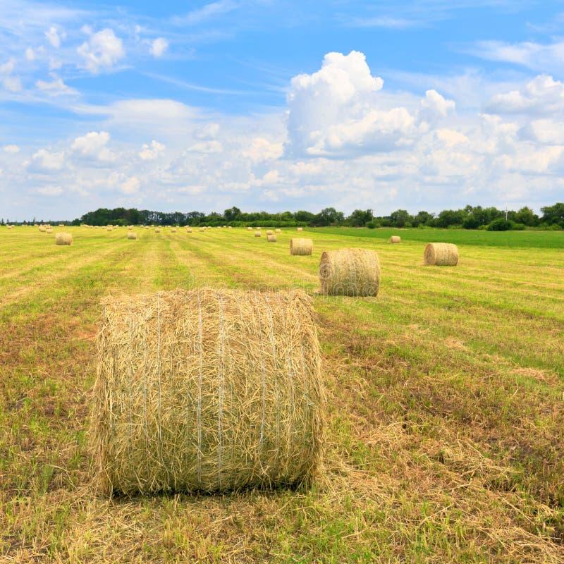 Landwirtschaftliches Feld mit Heurollen stockfoto