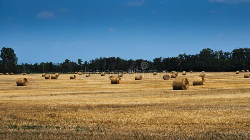 Landwirtschaftliches Feld mit Rundballen Heu, zum des Viehs im Winter einzuziehen lizenzfreies stockbild