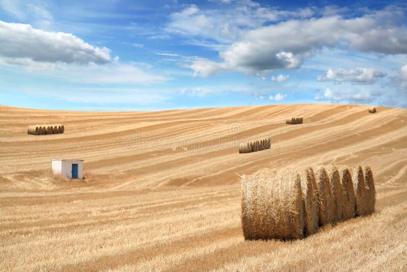 Landwirtschaftliches Feld nach Jahreszeitgetreide lizenzfreie stockfotos