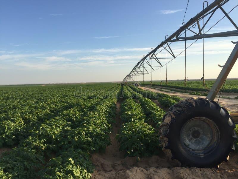Landwirtschaftliches grünes Feld am sonnigen Tag lizenzfreies stockfoto