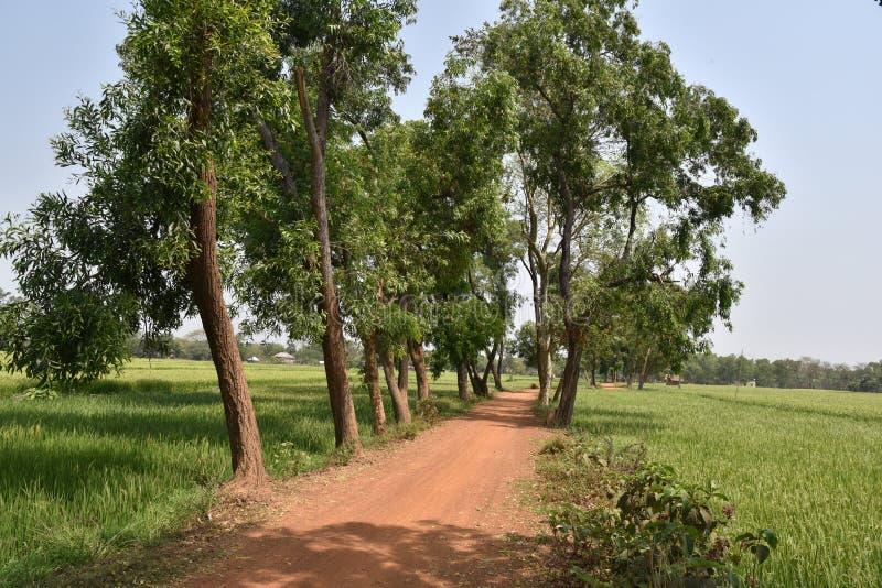 Landwirtschaftliches Indien lizenzfreies stockfoto