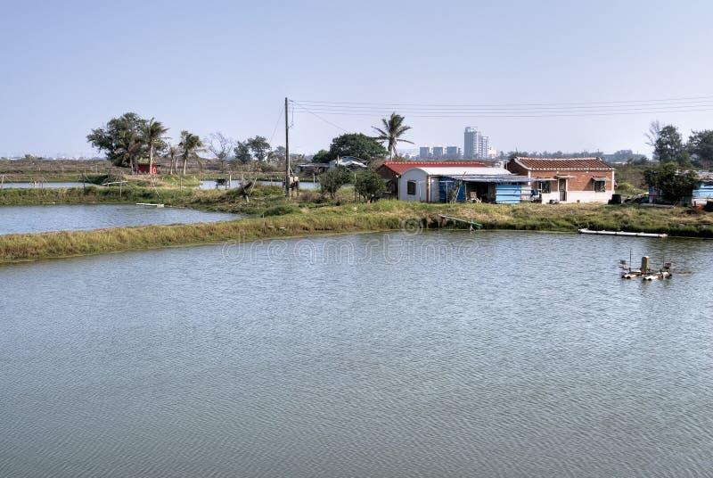 Landwirtschaftliches szenisches von Fischteich lizenzfreies stockfoto