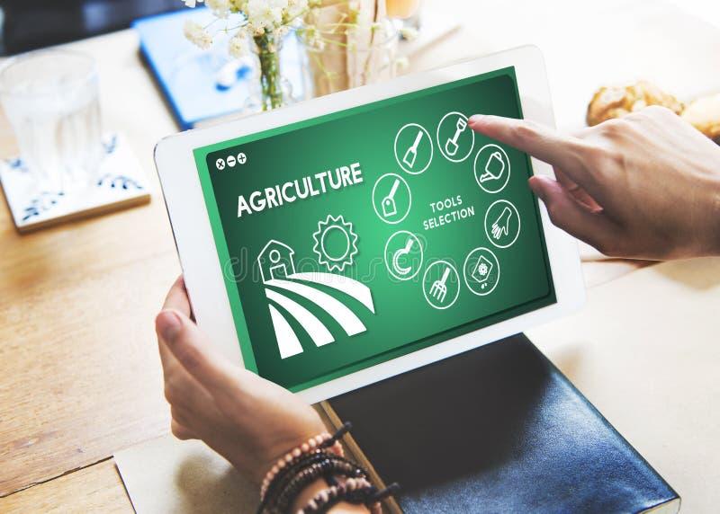 Landwirtschafts-Bauernhof-Ernte-Produktions-Betriebskonzept stockfoto