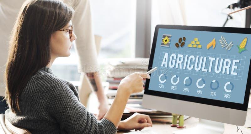 Landwirtschafts-Land-Ernte-Bauernhof-Lebensmittel-Land ernten Konzept lizenzfreie stockbilder