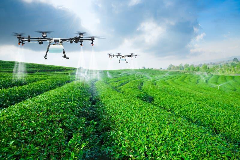 Landwirtschaftsbrummenfliege zu gesprühtem Düngemittel auf den Feldern des grünen Tees, intelligenter Bauernhof 4 Das Wort der ro lizenzfreie stockfotografie