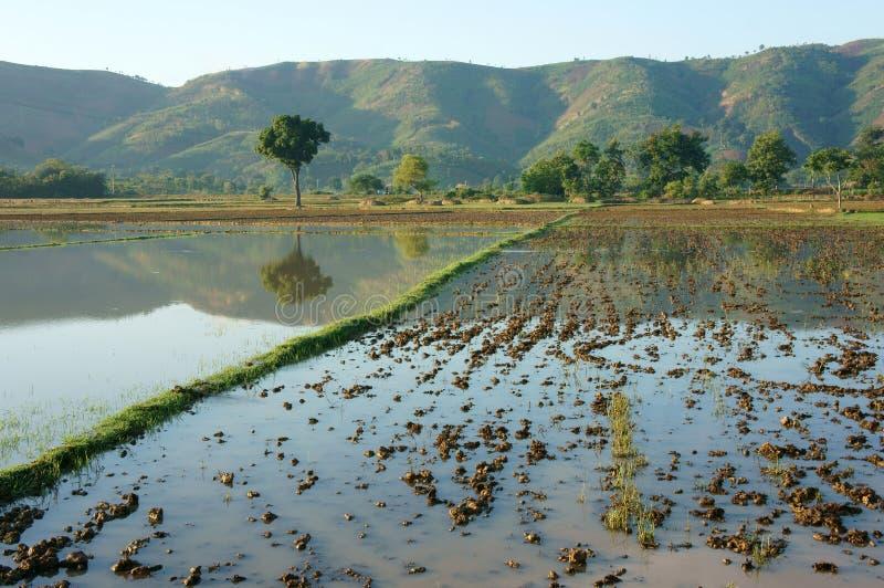 Landwirtschaftsfeld, Baum, Berg, reflektieren sich stockfotografie