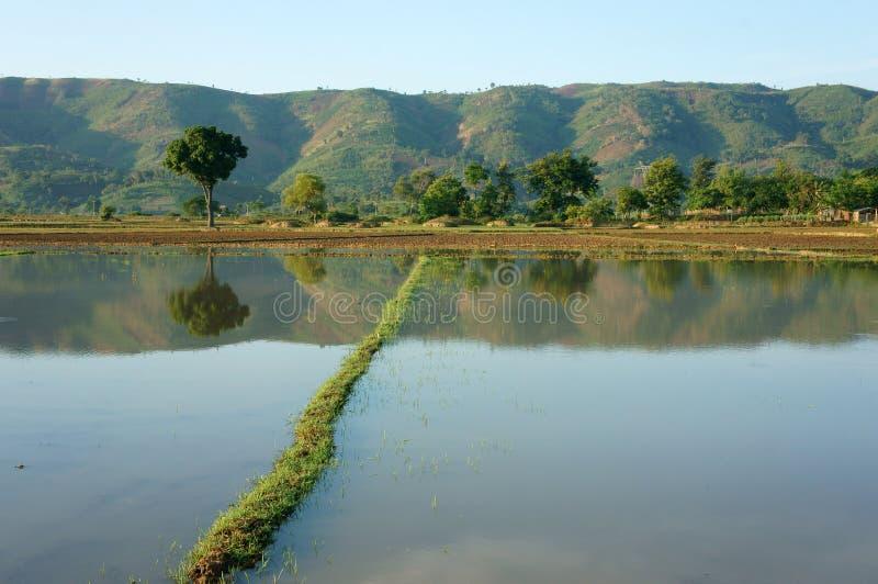 Landwirtschaftsfeld, Baum, Berg, reflektieren sich stockfoto
