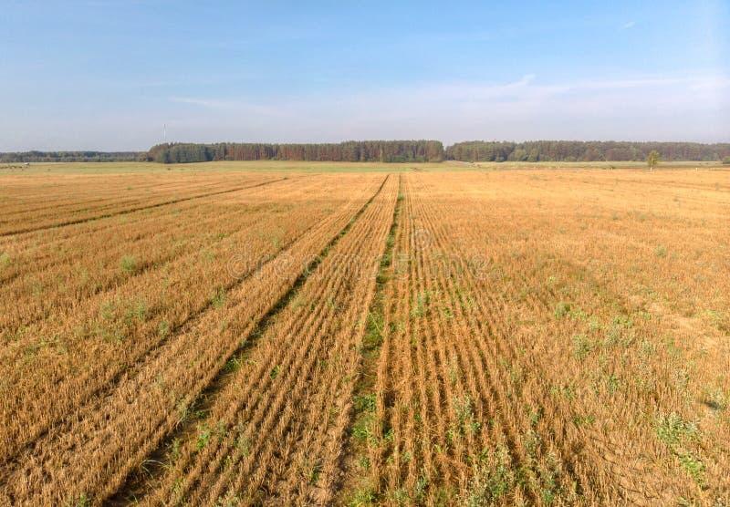 Landwirtschaftsfeld-Brummenphotographie von geschnittenen Ernten stockfotografie