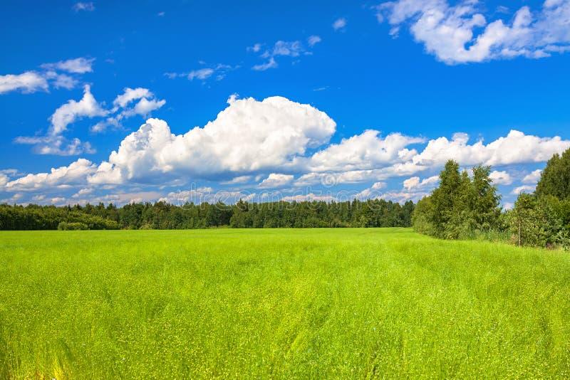 Landwirtschaftsfeld mit Flachs, eine Frühlingsansicht stockfotos