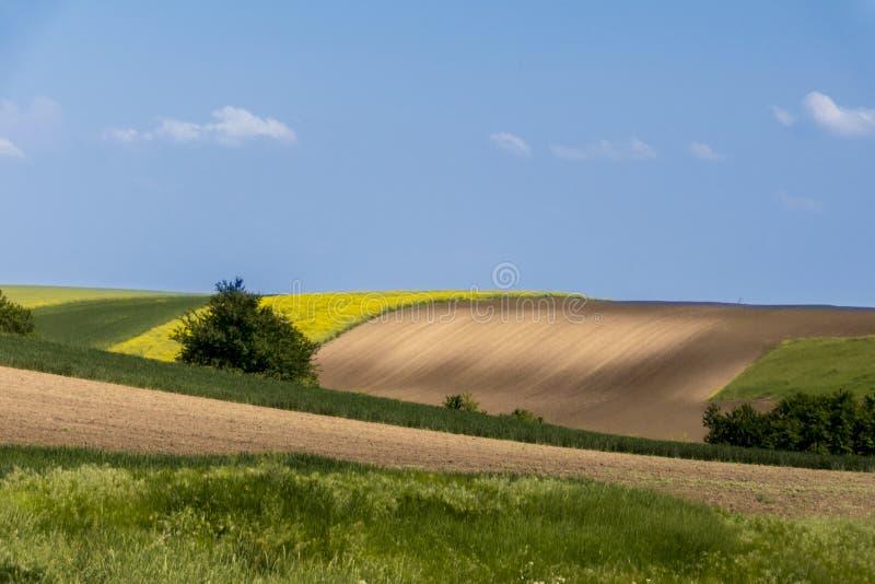 Landwirtschaftsfeld und blauer Himmel stockfoto