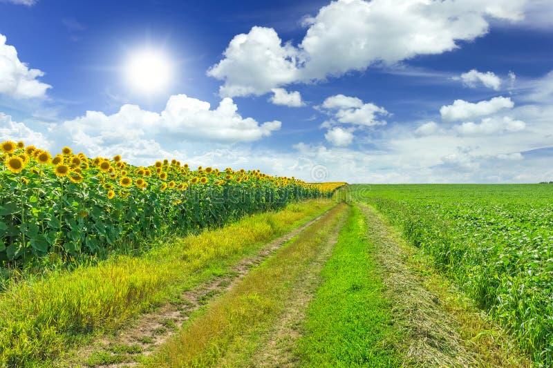 Landwirtschaftsfelder stockfotos