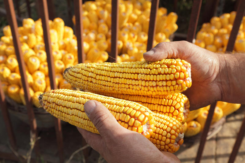 Landwirtschaftskonzept stockfoto