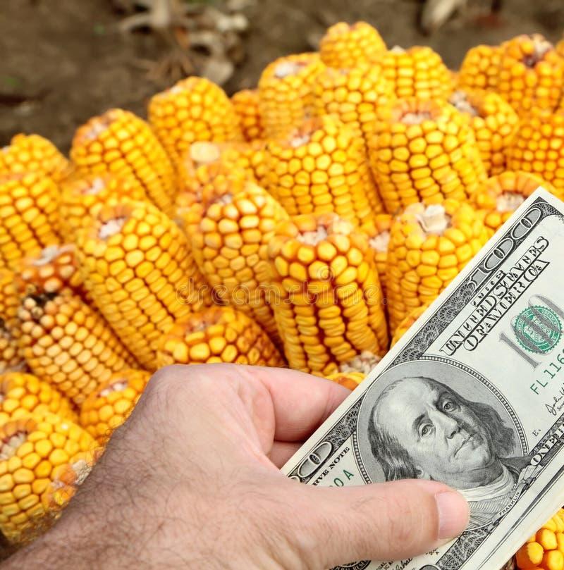 Landwirtschaftskonzept stockbild