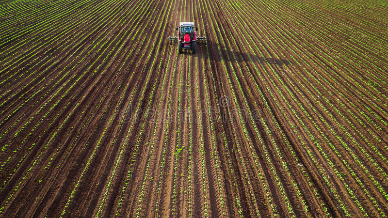 Landwirtschaftstraktor, der auf Weizenfeld pflügt und sprüht lizenzfreie stockfotos