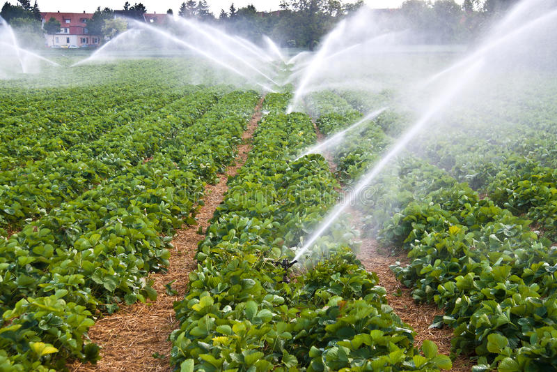 Landwirtschaftswasserspray stockbild