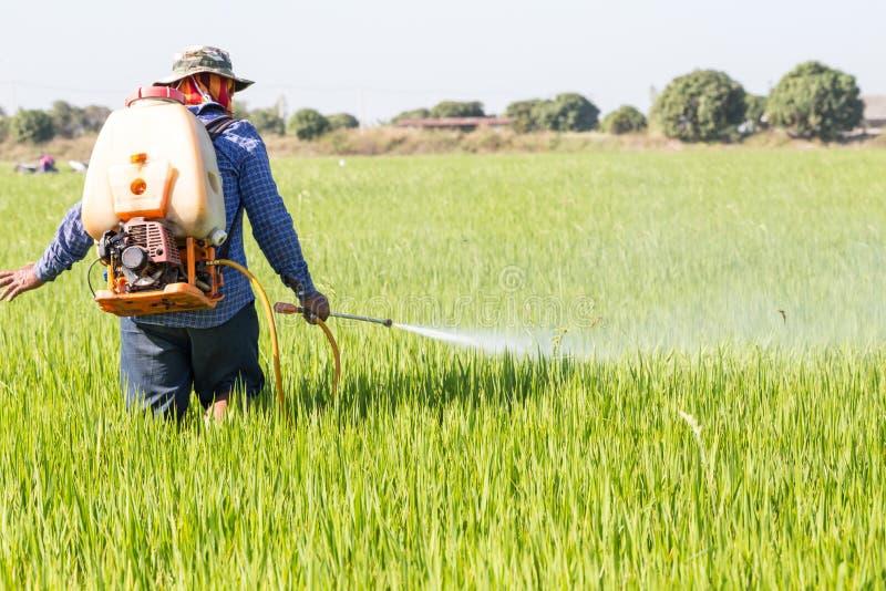 Landwirtsprühschädlingsbekämpfungsmittel auf dem Reisgebiet lizenzfreies stockfoto
