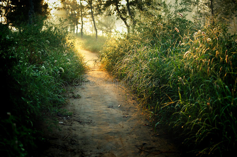 Download Lane stock image. Image of morning, lane, weeds, tree - 16250147