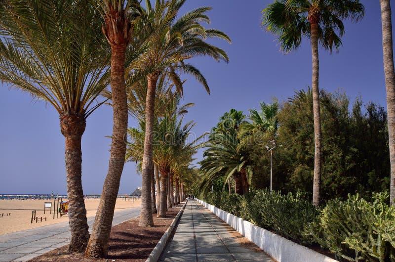 lane of green palms near the sand beach stock photos