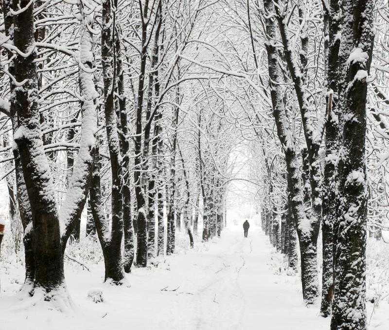 Download Lane in park stock image. Image of cover, background, design - 3769333