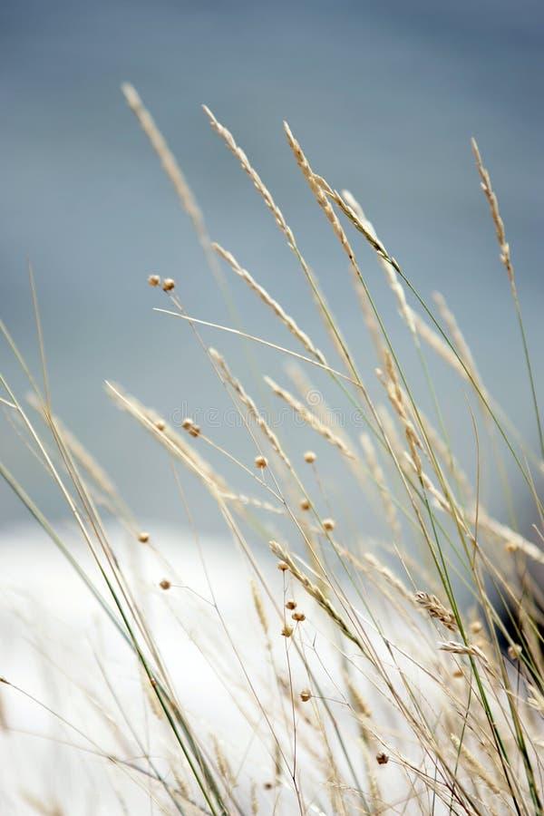 Lang droog gras stock afbeelding