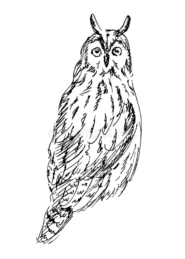 Lang-eared Uil royalty-vrije illustratie