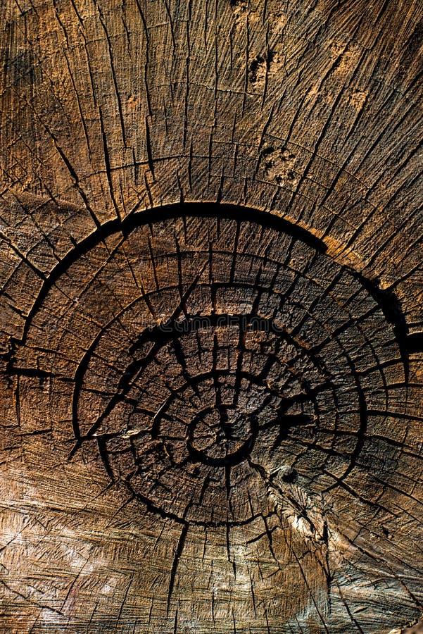 Lang gefällt, der Stumpf ziemlich trocken Einzigartiges Muster von Natur aus geschaffen stockbilder