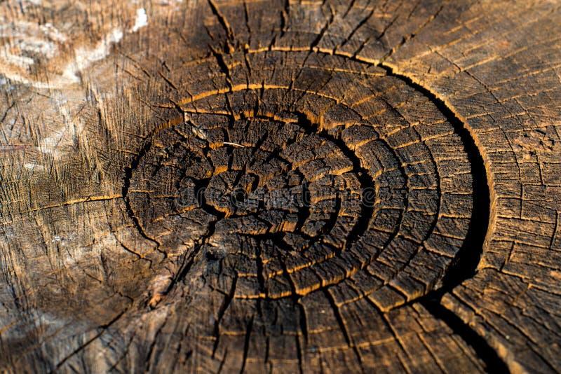 Lang gef?llt, der Stumpf ziemlich trocken Einzigartiges Muster von Natur aus geschaffen stockfotografie