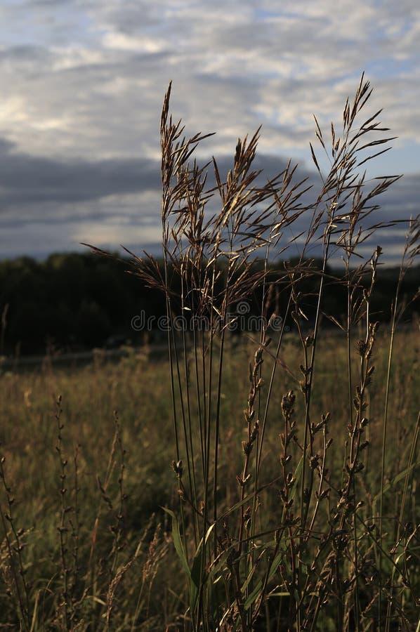 Lang groen gras op het gebied De weidelandschap van de de zomerlente op een cloudly dag De vriendschappelijke foto van aardeco Be royalty-vrije stock foto's